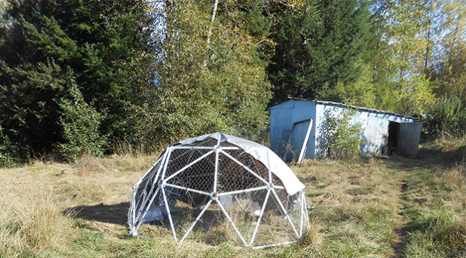 Geodesic Chicken Coop Completed